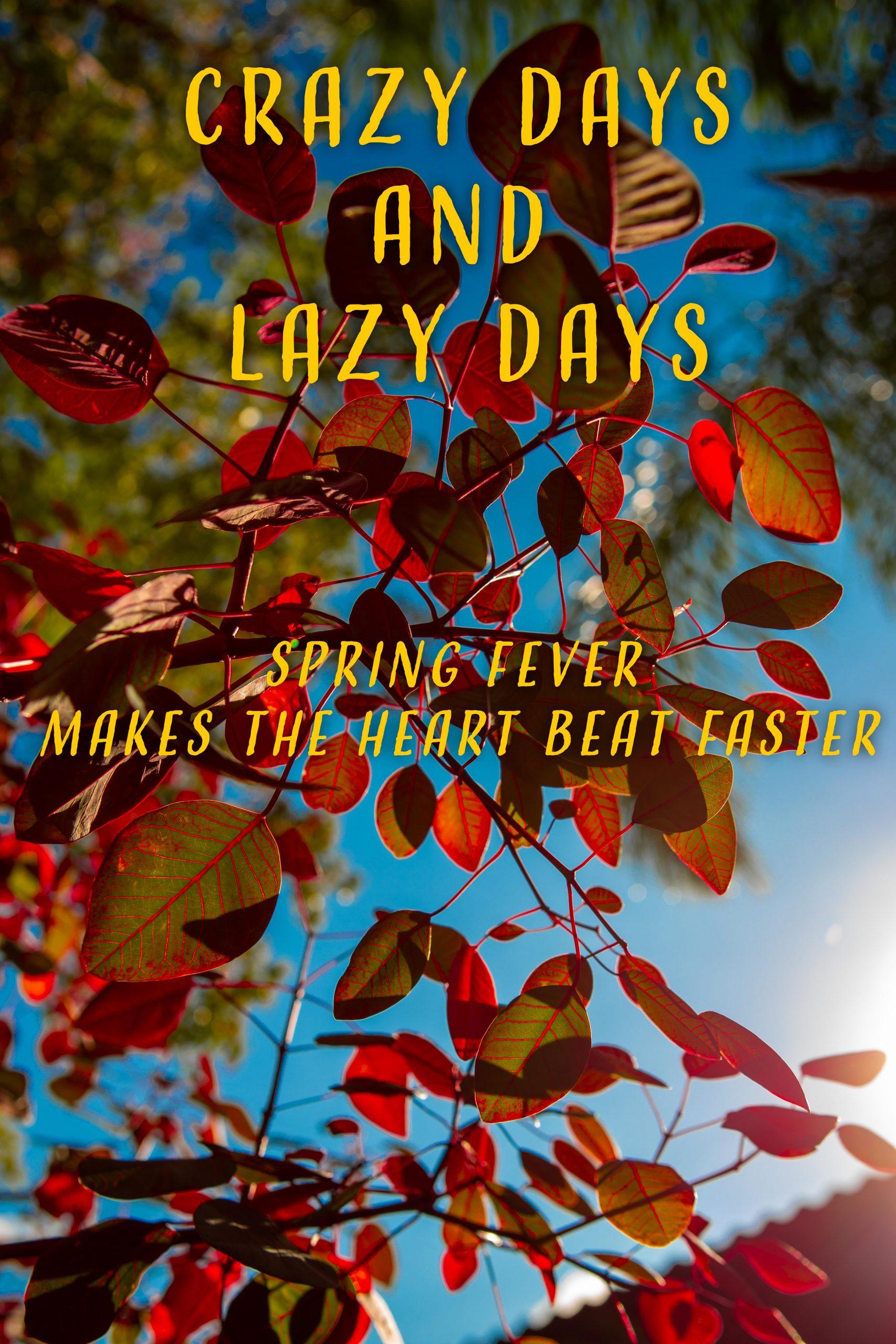 Crazy Days and Lazy Days 28 Oct